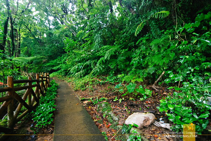 Hiking Trail at Sorsogon's Lake Bulusan