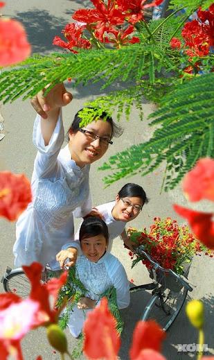 Vietnam School girls pick red flame flowers