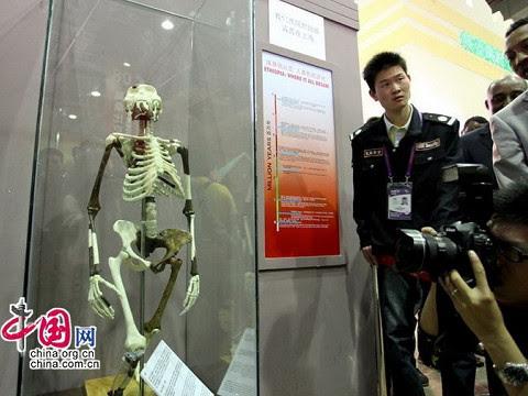 人類祖先露西2