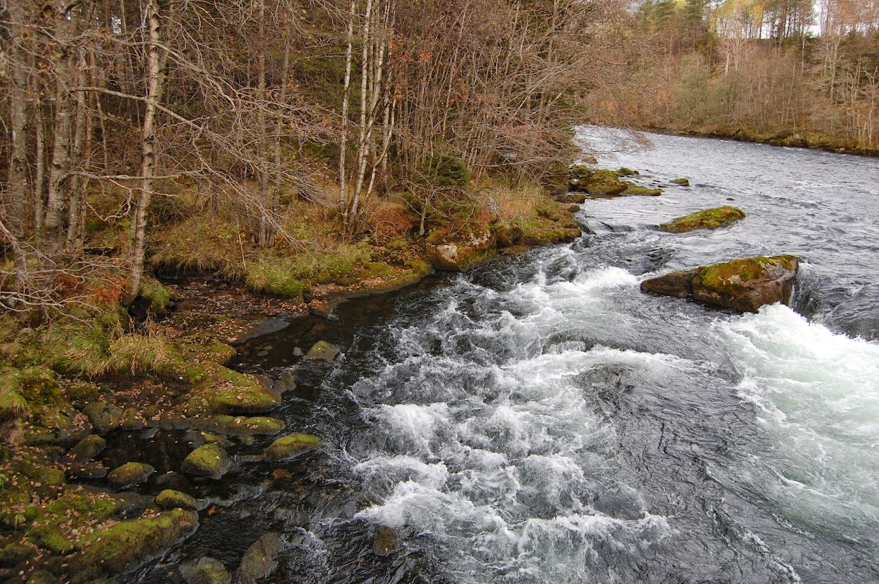 White capped river bouncing over rocks by a moss-and-bare-tree lined bank.