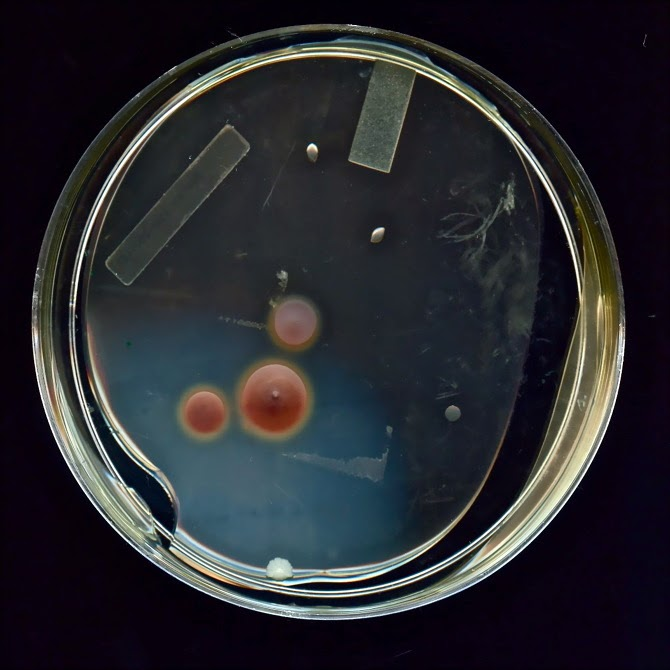 Bacterial Self Portrait by Olivia Vankuiken