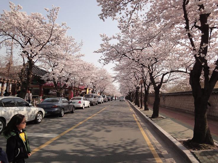 Gyerim Road Cherry Blossoms in Gyeongju 2
