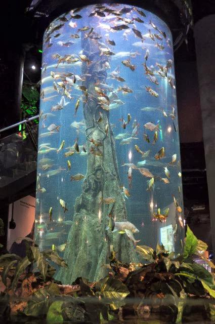 Aquaria-KLCC