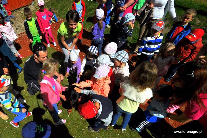 Rottweiler głaskany przez dużą grupę dzieci