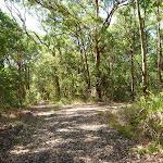 Trail intersection near Bower Bird Creek in Blackbutt Reserve (400741)