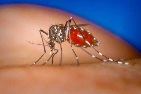 dengue fever signs, symptoms & medical treatment
