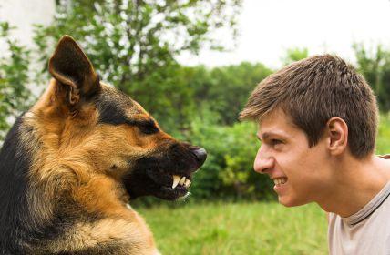 giải mã đánh nhau với con vật