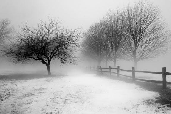 """""""Morning Fog"""" by Photographer Gary Morrison."""