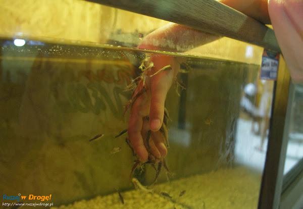 Tuchlino Park Egzotycznych Zwierzaków - rybki obgryzające naskórek