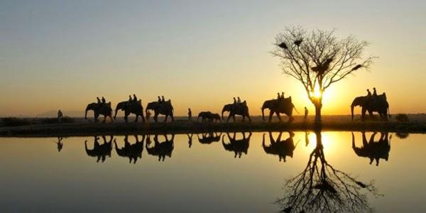 Safari sudafricano (Sudáfrica)