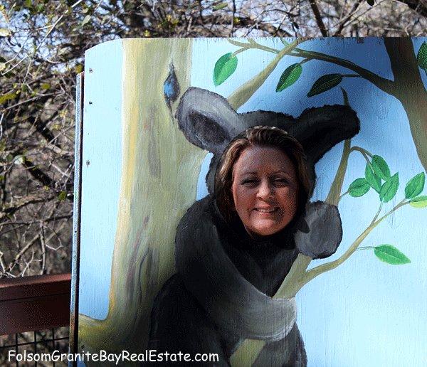 cougar at Folsom Zoo