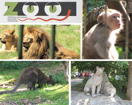 Zoo Tg. Mures