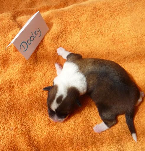 Dooley kurz nach der Geburt
