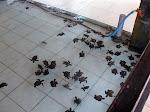 Gili Trawangan: centre de protection de tortues de mer