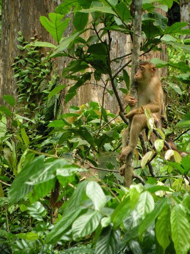 Sepilok Borneo