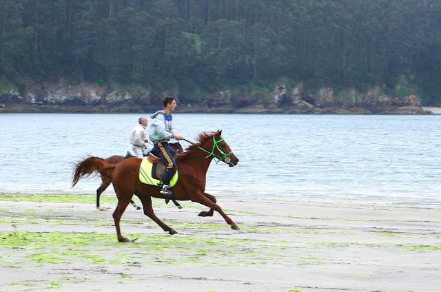 carreras caballos por la playa, cedeira, marisco, percebes, casa rural a vía láctea, www.avialactea.com