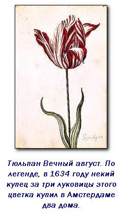 Полцарства за тюльпан