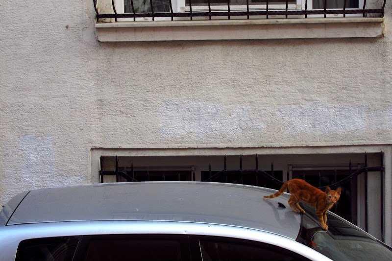 Orange tabby in Kadikoy