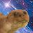 Jason Robichaud avatar image