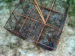 fish_trap.jpg