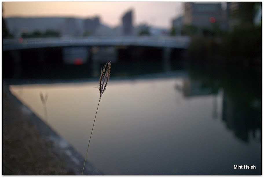 鄉  川  (6  P)