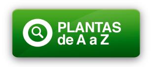 Plantas de A a Z