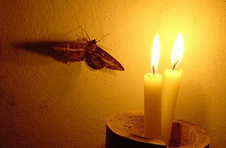 Moth And Flame Sufi Metaphor Image