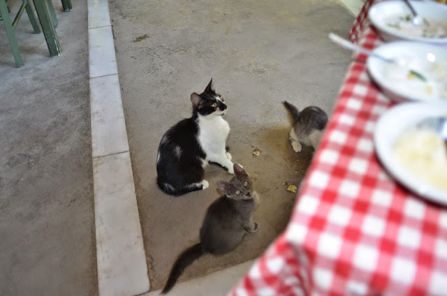 кипр, пафос, таверна hondros, кошки