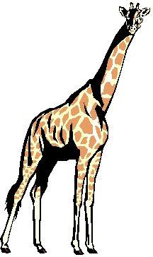 giraf__3.jpg