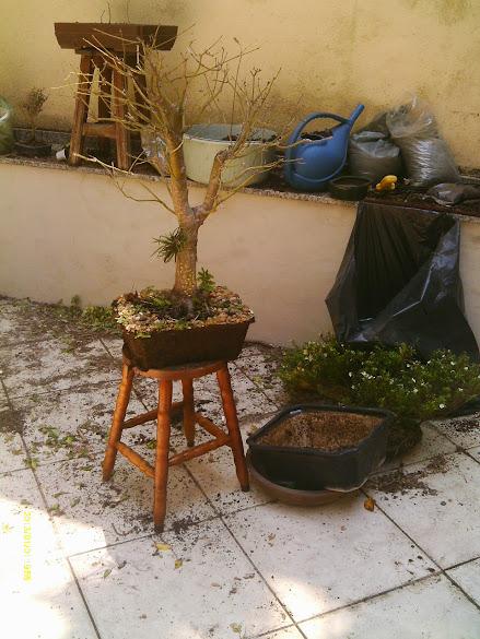 Dra. Valéria ,Urca, Manutenção... IMAG0177