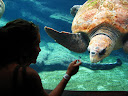 This is Lora with her favorite animal - turtles. I believe this one was a hawksbill sea turtle, but I could be wrong.