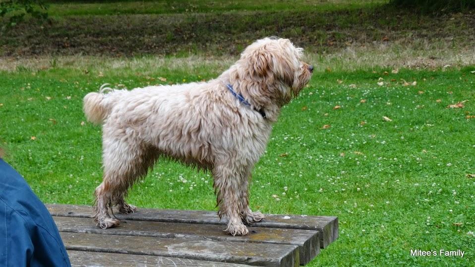Balades canines en Nord (59)/Pas de Calais (62) - Boulogne-sur-Mer, Calais et Lille - Page 15 DSC00099