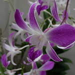My Orchid Garden 2011