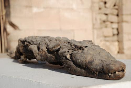 Animal Mummies Of Ancient Egypt