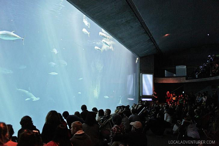 Monteray Bay Aquarium.