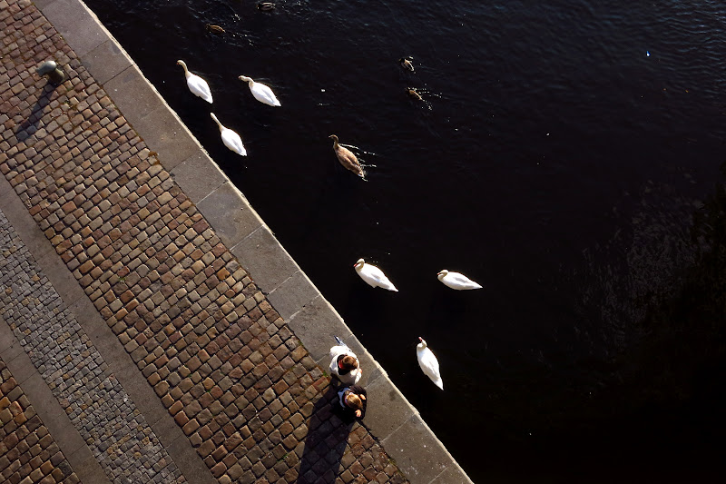 Swans from above