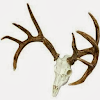 Whitetail Hunter