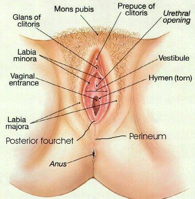 como penetra el pene en la vajina