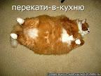 Кот - обжора