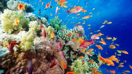 Coral Reef, Southern Red Sea, Near Safaga, Egypt.jpg