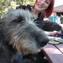 Arahu Wolfhounds