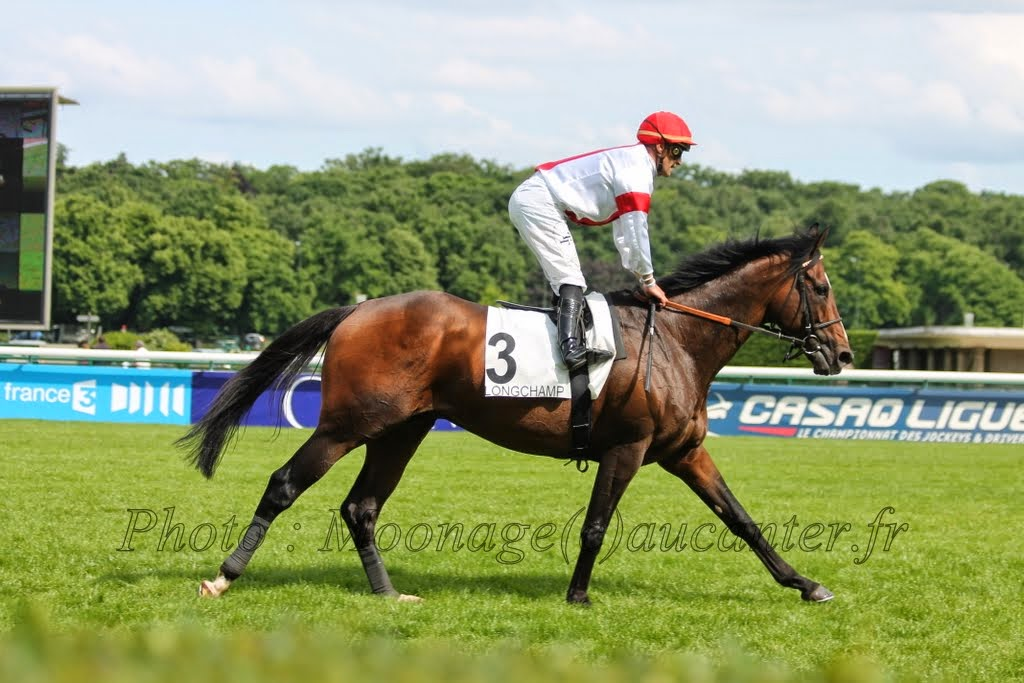 Photos Longchamp 25-05-2014 IMG_1340