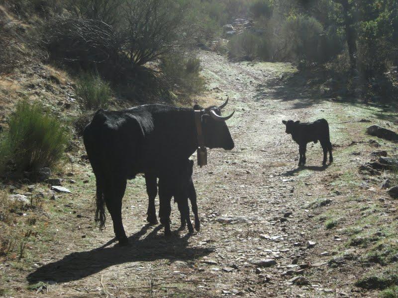 20121020 - TORNAVACAS-GARGANTA SAN MARTIN - CASTILFRIO -PEÑANEGRA - TORNAVACAS DSCF2586