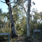 Sawpit Track passing between these trees (298790)