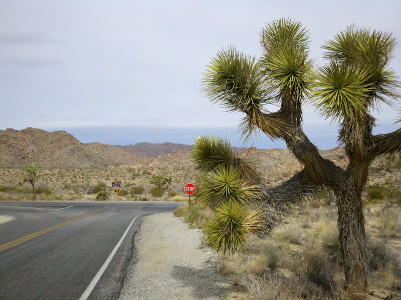 Joshua Tree National Park • Intersection