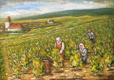 Práca vo vinohrade