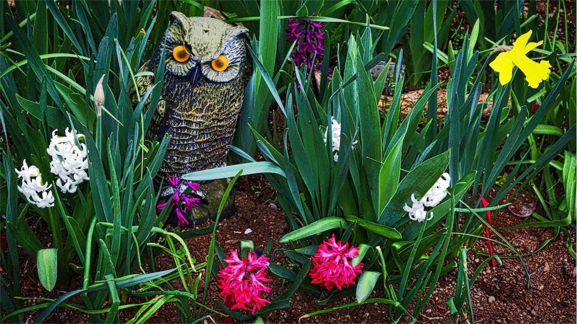 Owl Garden.jpg