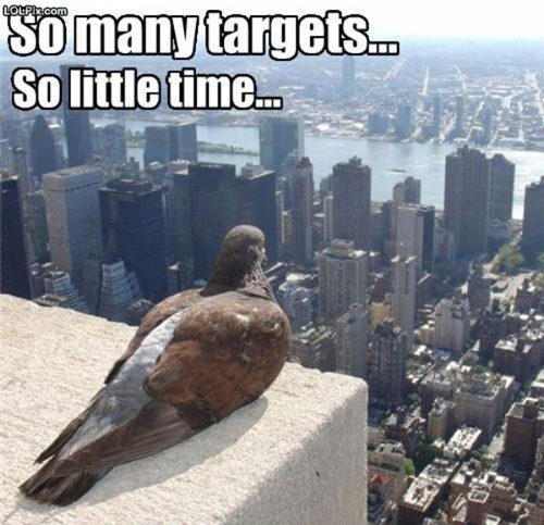 photo of a pigeon looking out over a city and thinking so many targets, so little time