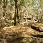 Top of spur south of Sams Creek (331151)