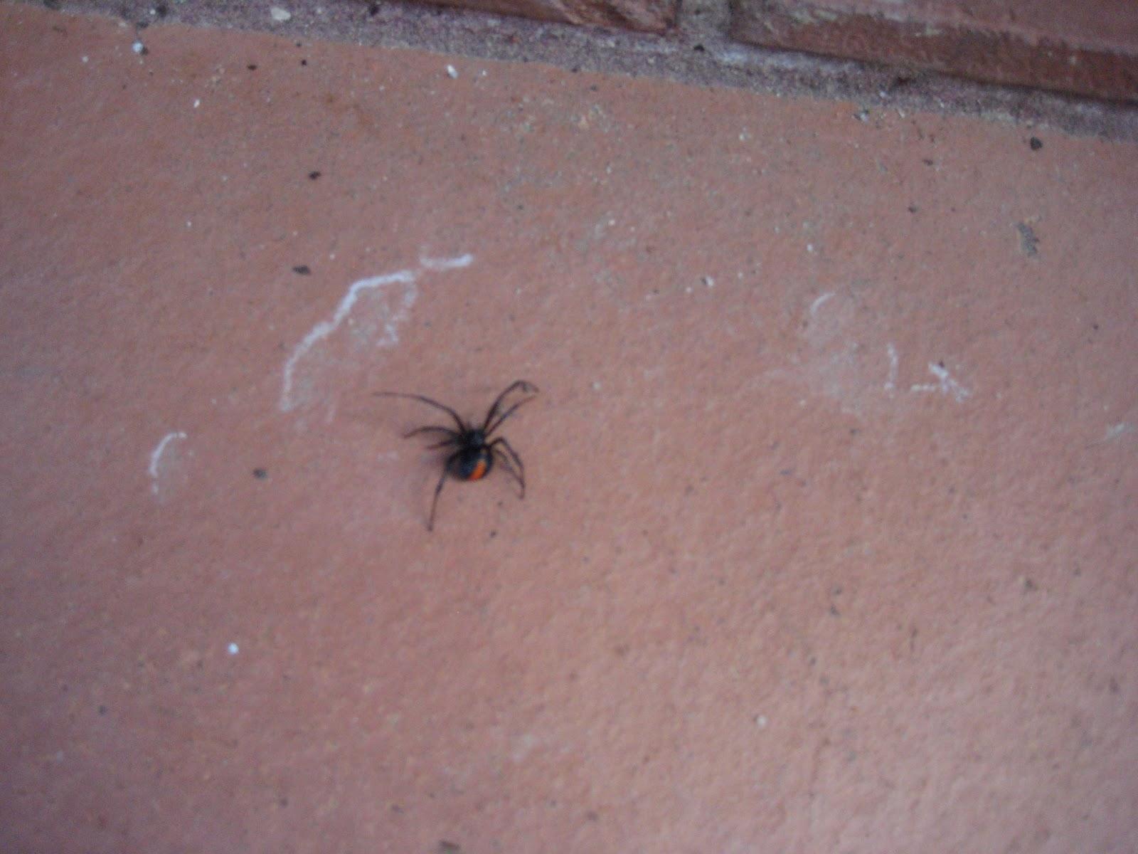 Pictures Of Mild Bed Bug Bites | BangDodo